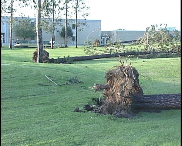 Trees are uprooted in front of Wittenberg-Birnamwood High School