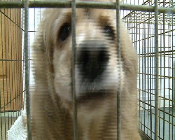 """Celeste"", a mill dog rescued by the Clark County Humane Society"