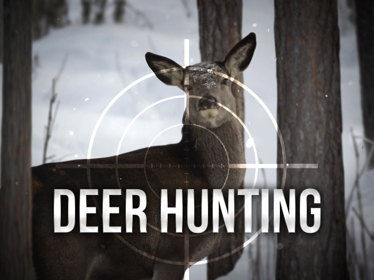 Today is the first day of deer season: 15 critical questions