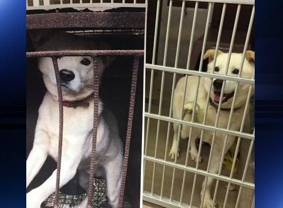 Photo: Oshkosh Humane Society
