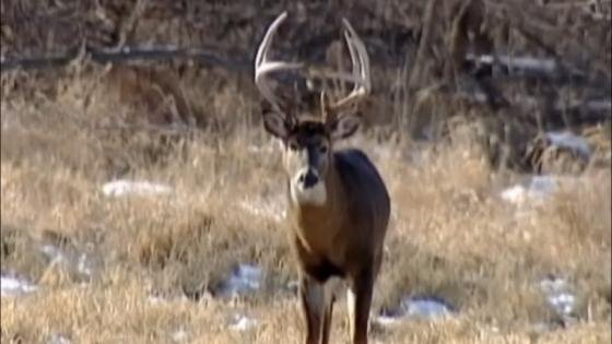 Another deer tests positive for CWD