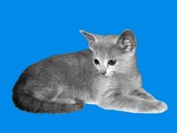 © Generic Cat Image