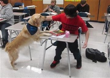 "(AP Photo/Martha Irvine). In this Jan. 14, 2013 photo, a student pets Junie, the school's ""therapy dog,"" at Prospect High School in Mt."