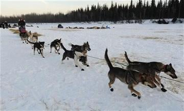 (AP Photo/Bill Roth, Anchorage Daily News). Veteran Iditarod musher Kelley Griffin of Wasilla leaves the Athabaskan village of Nikolai, Alaska, on Tuesday, March 5, 2013.