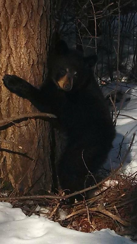 Photos bear sightings wqow tv eau claire wi news18 news photos bear sightings wqow tv eau claire wi news18 news weather and sports publicscrutiny Choice Image