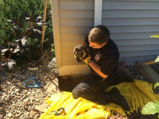 Cat Rescue Madison Wisconsin