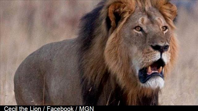 Photo: Cecil the Lion / Facebook / MGN